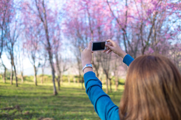 female take photo of Spring cherry blossom in garden