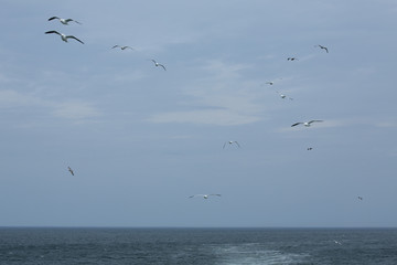Seagulls soar over mouth of the Delaware River.