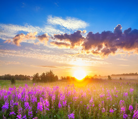 rural panorama landscape with sunrise  and  blossoming meadow