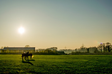 horses at sunset in a big field Europe Germany