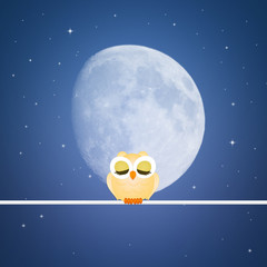 cute owl in the night
