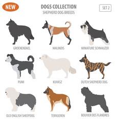 Shepherd dog breeds, sheepdogs set icon isolated on white . Flat style
