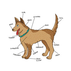 Dog external anatomy. Puppy parts on English
