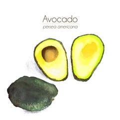 Avocado - Aquarell mit Schatten