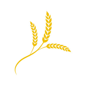 Wheat spike in flat style. Agriculture wheat