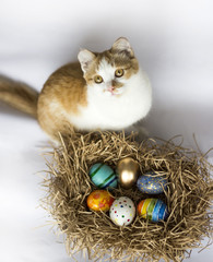 Easter colorful eggs in the nest and a ginger cat on white background.