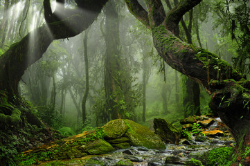 Wall Murals Jungle Asia rainforest