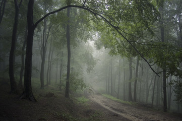 forest road landscape with green foliage