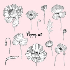 Set of various poppy. Contour flower collection. Black and white hand drawn illustration.