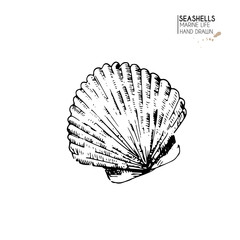 Vector hand drawn set of seashells. Isolated starfish. Underwater animal life. Tropical scallop on white. Engraved art.