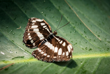 Farfalla in primo piano macro su sfondo