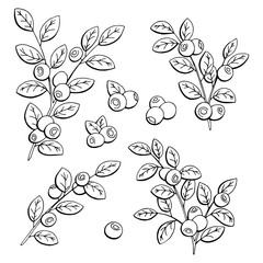 Blueberry graphic black white isolated sketch illustration vector