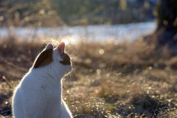 Cat looking backward in golden light.