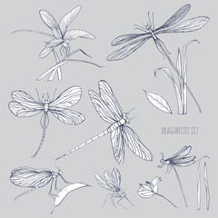 Set of various dragonflies in different poses. Monochrome hand drawn collection flying adder. Vector illustration.