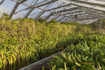 Überwintern im Gewächshaus-Tropenpflanzen