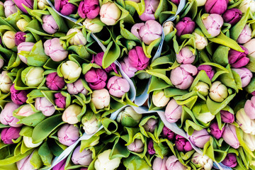 Assortment of colorful tulips in a flower shop