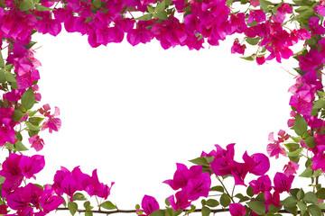 Tuinposter Azalea Bougainvilleas frame isolated on white background. Frame in spring.