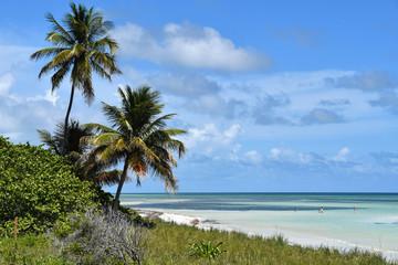 Palms on Bahia Honda - Keys Island, Florida, USA