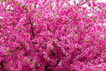 Flower, Blossom, Cherry Blossom, Cherry, Vegetable Garden
