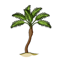 Palm beach tree.Summer rest single icon in cartoon style vector symbol stock illustration.