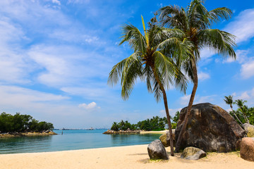 Palm trees on beautiful beach.