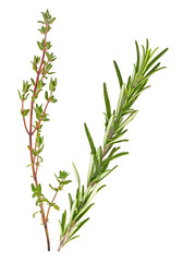 Thyme and rosemary sprigs isolated on a white background, Spices