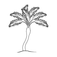 Palm beach tree.Summer rest single icon in outline style vector symbol stock illustration.