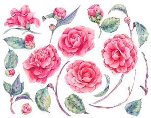 Watercolor floral set of camellia flowers