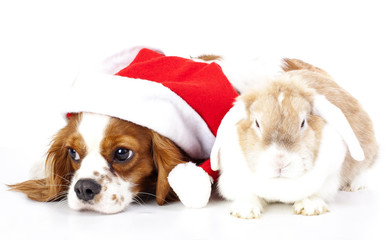 Christmas animal pet dog santa hat. Lop rabbit and puppy together. Xmas animals pets.
