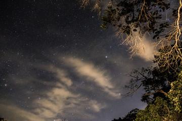 Fotobehang Bamboo Clear Night Sky in Teresopolis, Rio de Janeiro, Brazil