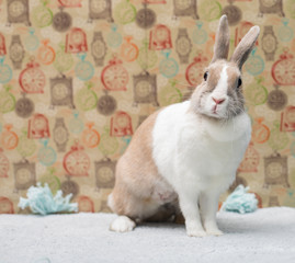 Funny bunny sitting on a rug behind a colorful wall