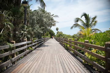 Pathway between the trees at the Beach