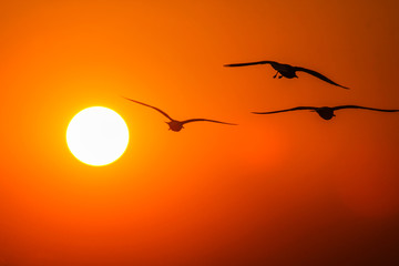 Gulls in the rays of the sunset