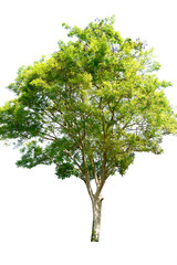 Tree isolated on a white background clipping path