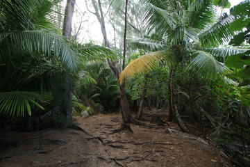 Tropical Vegetation of Curieuse Island close Praslin, Seychelles, Indian Ocean, Africa