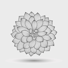 Abstract monochrome floral background. Hand drawing flower dahlia. Element for design