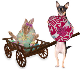 Cute dog chihuahua and bunny have found a large easter eggs for easter day