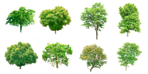 Group of isolated trees on white background.