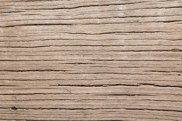 Old elm wood texture background