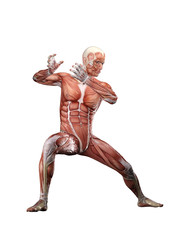 Muscle male doing Tai Chi anatomy 3D Illustration