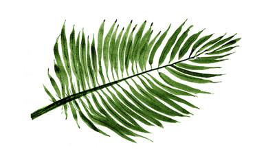 Palm leaf, Illustration, Nature Sketch