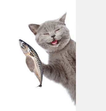 Happy cat holding a fish in its paw and peeking from behind empty board. isolated on white background