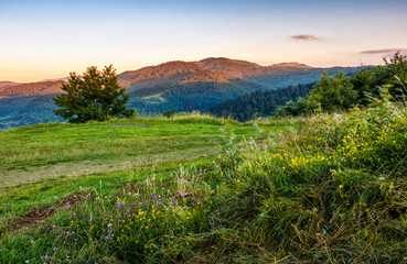 countryside summer landscape with field, tree and mountain ridge