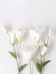 White flowers on white background. Flat lay. Top view. Frame of flowers