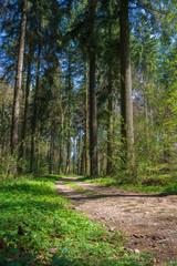idyllischer Weg im Wald mit viel Grün im Sommer