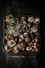 Overhead view of variety of mushroom on tray