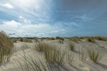 In The Dunes Of Renesse Zeeland / Netherlands