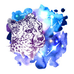 sketch illustration  cheetah