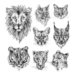 Collection of different cats.