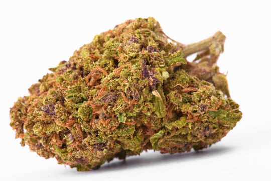Close up of J1 strain prescription medical marijuana bud